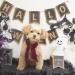 ミックスのカット・ミックス&柴犬のシャンプー