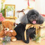 色々な犬種ののシャンプー&カット