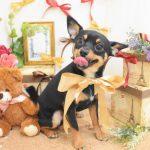 色々な犬種のーのシャンプー&カット
