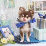 色々な犬種のシャンプー&カット